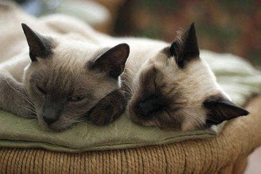 Cats, Cat, Animals, Pet, Grey, Cute, Cat's Eye
