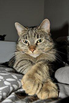 Tabby, Cat, Idle Cat, Pets, Rest, Kitten, Feline