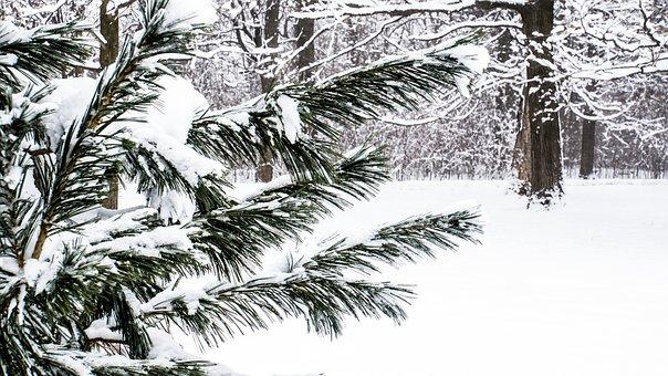 Snow, Evergreen, Winter, Bushes, Tree, Winterwonderland