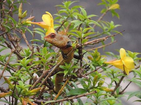 Chameleon, Chameleon On A Plant, Flower And Chameleon