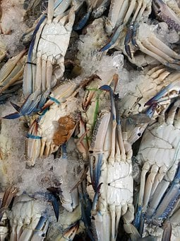 Crab, Wet, Market, Food, Natural, Animal, Wildlife