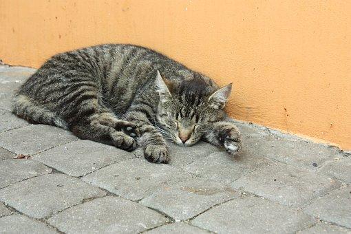 Tomcat, Cat, Kitten, Animal, Charming, Fur, Pet