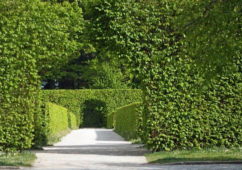 Archway, Hedges, Green, Leaves, Rest, Serenity, Spring