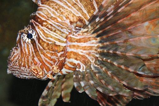Fish, Aqquarium, Meeresbewohner
