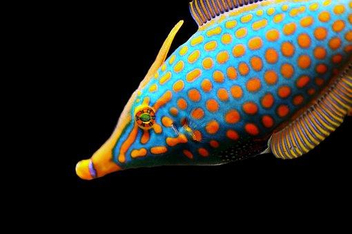 Fish, Exotic, Meeresbewohner, Underwater World