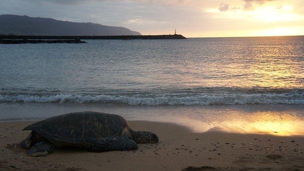 Turtle, Sunset, Beach, Nature, Water, Ocean, Sea