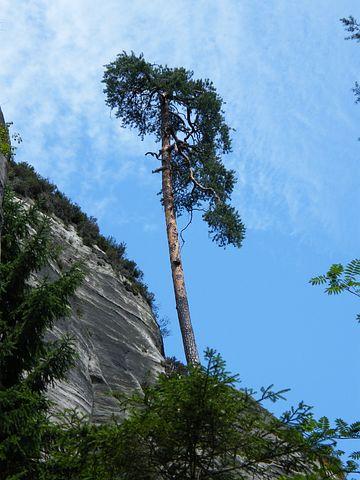 Pine, Lonely, Rock, Blue, Sky, Summer, Rocks, Tree