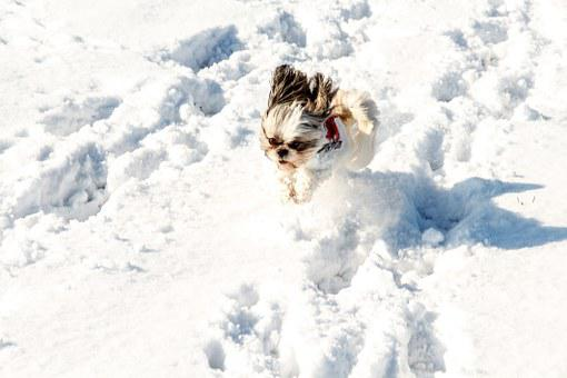 Snow, Dog, Pet, White, Cold, Small, Sweet, Cute