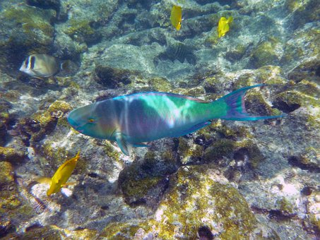 Rainbow, Fish, Underwater, Marine, Snorkel, Hawaii