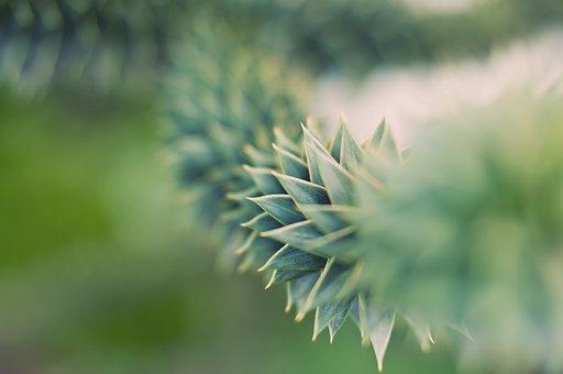 Blur, Bright, Flora, Flower, Garden, Grass, Growth
