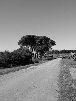 Road, Rural, Travel, Countryside, Asphalt, Destination