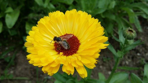 Marigold, Fly, Fly On Flower, Insect, Blossom, Bloom