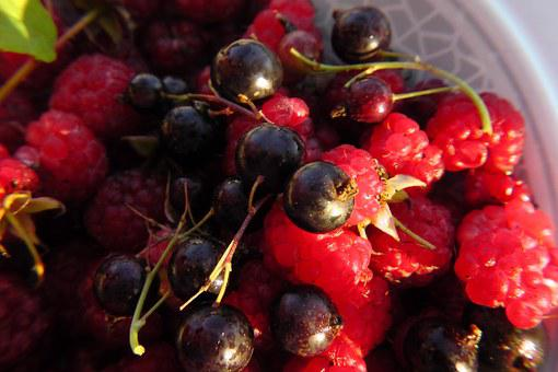 Fruits Of The Forest, Fruit Plate, Black Currants