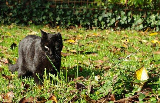 Cat, Black, Feline, Garden