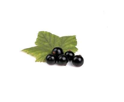 Berry, Black, Leaf, Food, Fruit, Fresh, Healthy, Sweet
