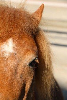 Animal, Pony, Hair Mane, Eyes, End Stain