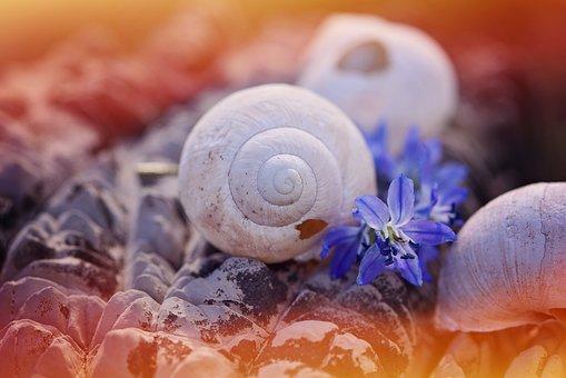 Shell, Empty, Leave, Damaged, Stone, Flowers