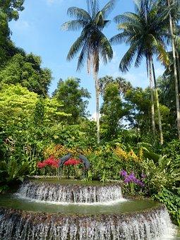 Park, Tropics, Tropical, Garden, Tree, Flowers, Nature