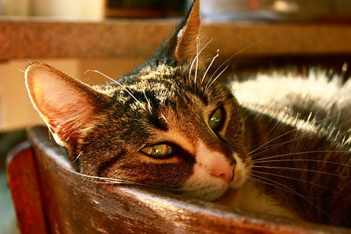 Cat, Cozy, Concerns, Schnurrhare, Chair, Sleep, Animal