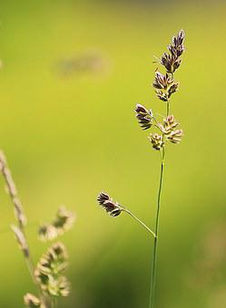 Grass, Beauty, Summer, Green, Yellow, Closeup, Macro