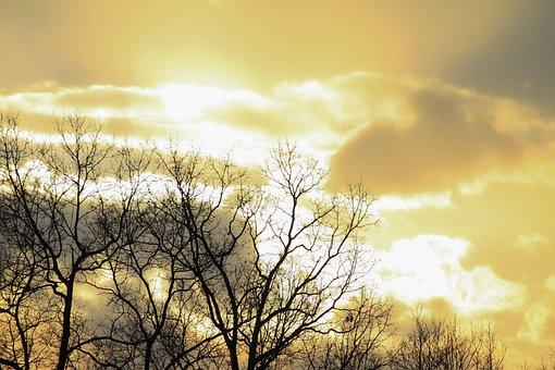 Tree, Branches, Bare, Autumn, Fall, Sunlight, Sunshine