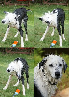 Dog, Wet, Shake, Fetch, Swim