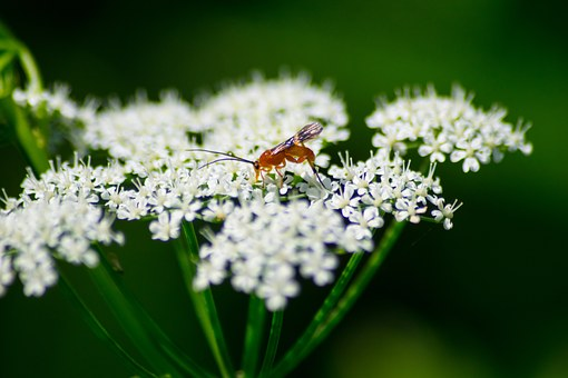 Beetle, White, Grassland Plants, Nature, Insect, Flora