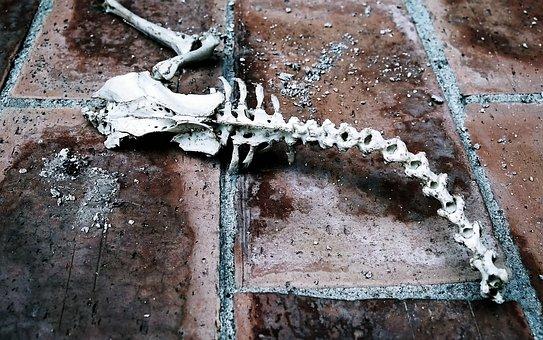 Fossil, Death, Animals, Science, Animal, Skeleton