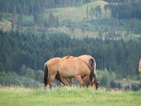 Beautiful Mustangs, Hood River, Oregon