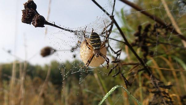 Spider, Nest, Ball, Insect, Arachnid, Nature