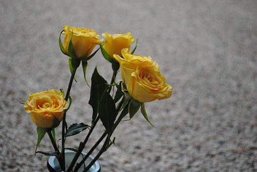 Rose, Yellow, Flower, Floral, Nature, Valentine, Love