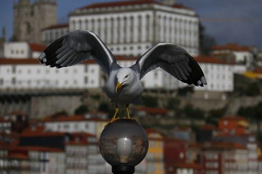 City, Landscape, Nature, Seagull, Flying Over The City