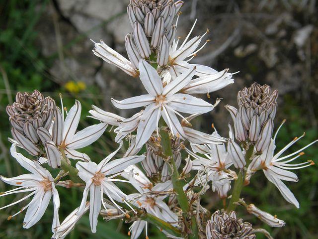 White Flower, Nature, Vegitation