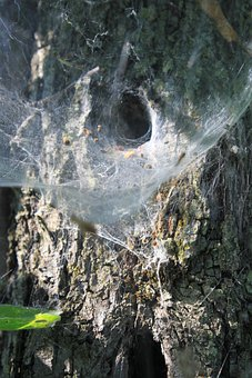 Cobweb, Nest, Spider, Tunnel, Web, Insects