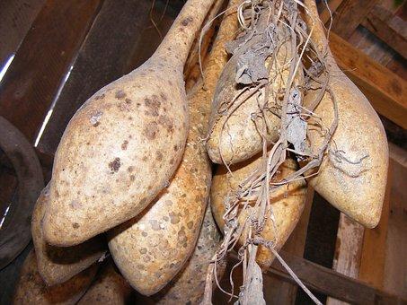 Bottle, Calabash, Dried, Gourds, Lagenaria, Pipe