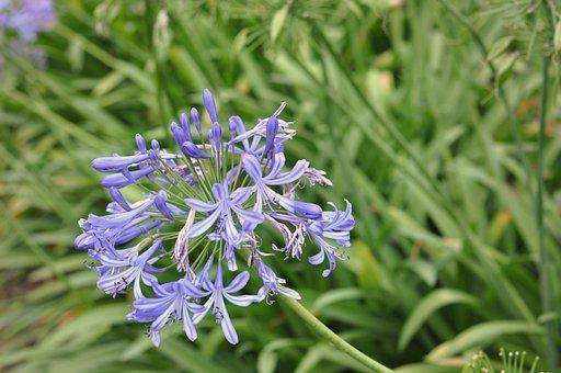 Flower, Flowers, Purple, Violet, Plant, Spring
