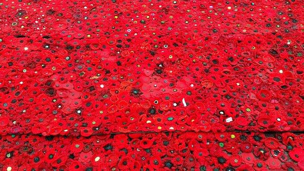 Poppy, Anzac, Remember, Remembrance, Flanders, Honour