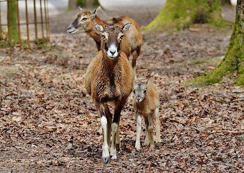 Wild, Roe Deer, Wildpark Poing, Nature, Red Deer