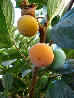 Kaki, Persimmon Fruit, Orange, Persimmon, Sharon, Ripe