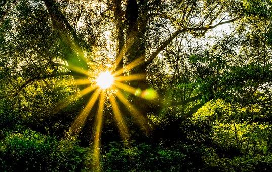 Forest, Hope, Radiant, Zen, Sunflare, Sunburst, Magical
