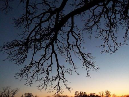 Tree, Bare, Branches, Silhouette, Autumn, Leafless