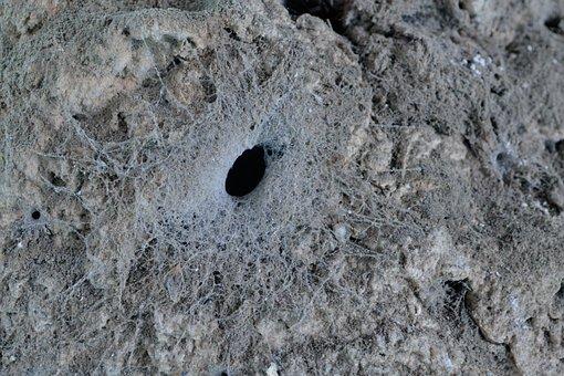 Web, Texture, Spider's Nest