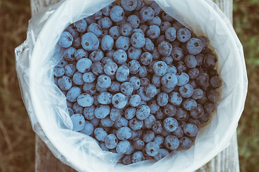 Antioxidants, Basket, Bench, Berries, Blueberries
