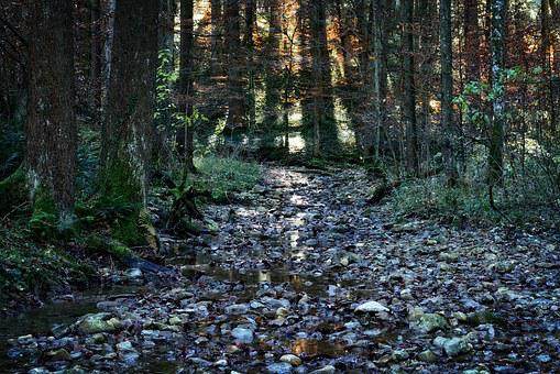 Forest, Autumn, Bach, Stream Bed, Nature, Water, Stones
