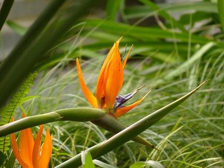 Blossom, Bloom, Caudata, Exotic