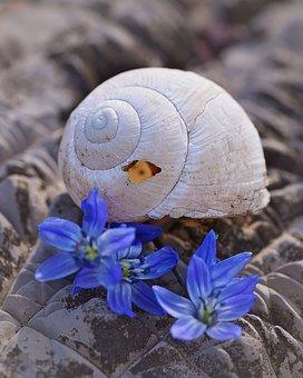 Shell, Leave, Empty, Empty Snail Shell, Broken, Damaged
