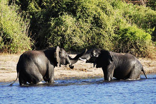 Elephant, Water Elephant, Fight, Rivals, River, Water