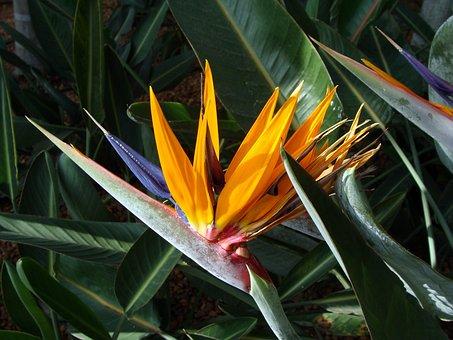 Orchid, Bird Of Paradise, Strelitzia, Floral, Plant