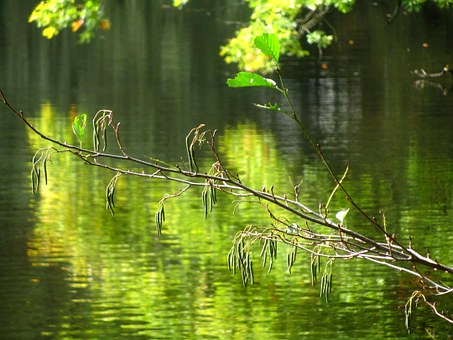 Branch, Lake, Nature, Forest, Mood, Autumn, Color