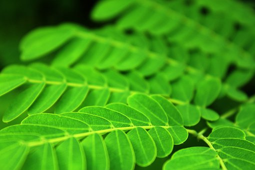 Leaves, Oblong Leaves, Round Leaves, Green